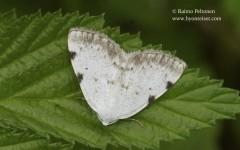 Lomographa bimaculata