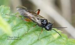Taxonus agrorum 1